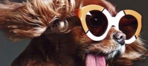 Cão sensação do Instagram protagoniza nova campanha de KarenWalker